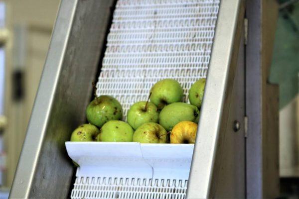 Lille æbledag