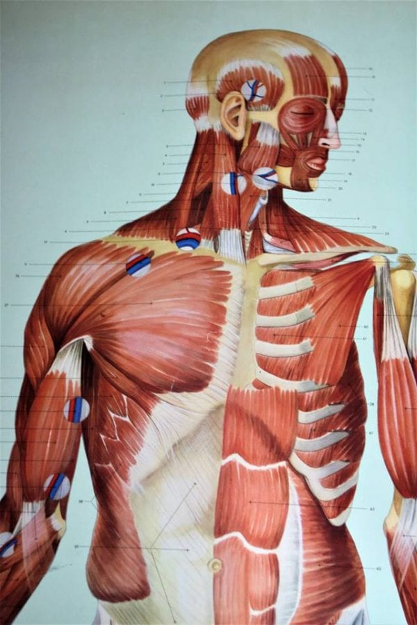 Lev anti-inflamatorisk